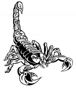 Scorpio 256x300